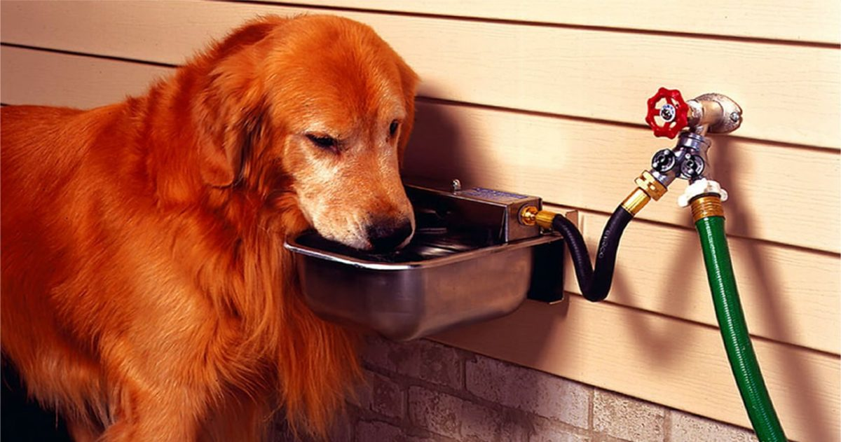 11 Reasons Your Dog Needs an Automatic Waterer