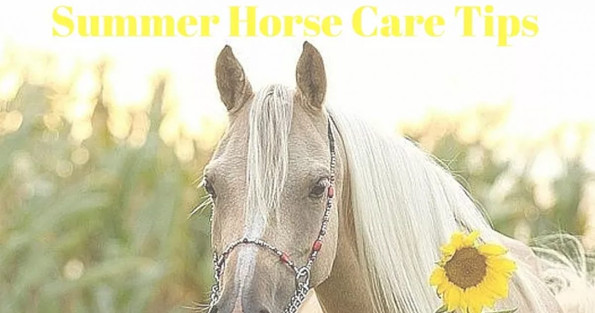 Horse Care Tips: Beat the Heat With Your Horse