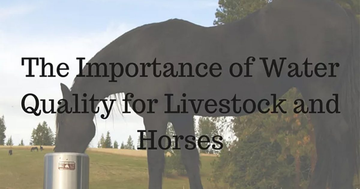 The Importance of Water Quality for Livestock and Horses