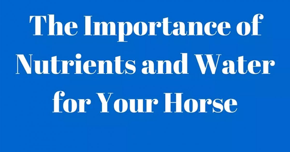 The Importance of Nutrients and Water for Your Horse