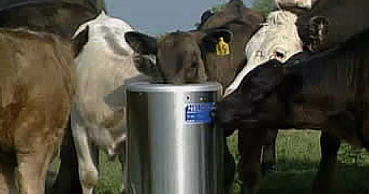 Livestock Waterer Guide: Finding the Right Fit